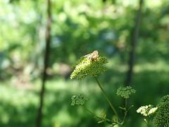 Méh a növényen 1