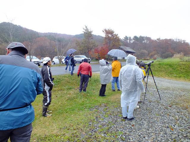 集合し,雨対策をしているところに姿を見せたオオマシコを観察する.