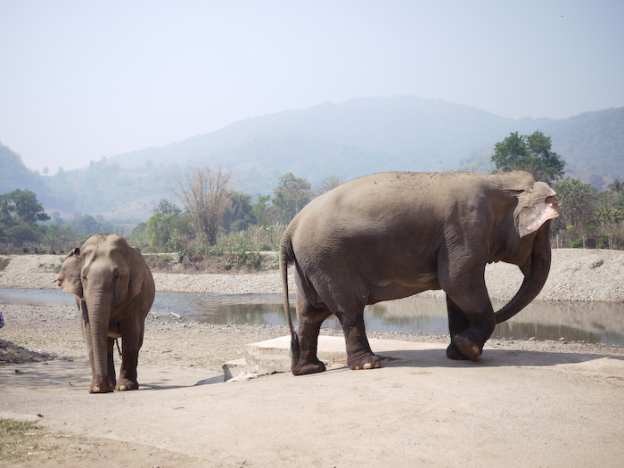 Elephant Nature Park Chiang Mai-7