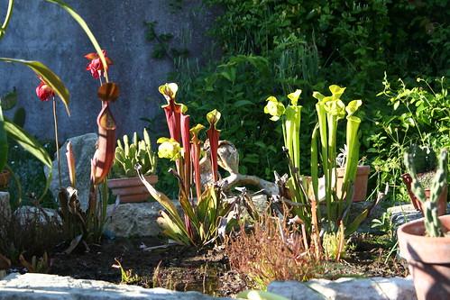 plantes2014 073