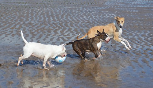 Dogging on Crimdon Beach