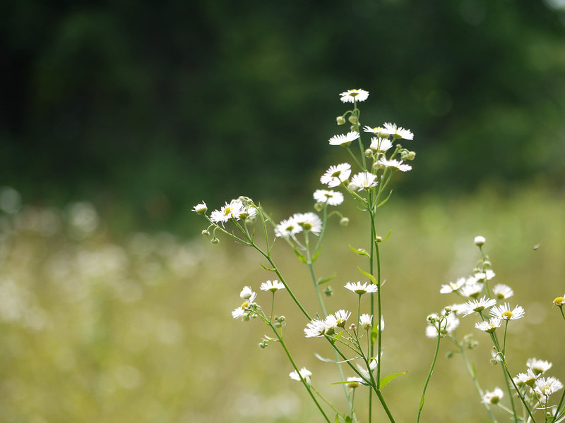 Field whites