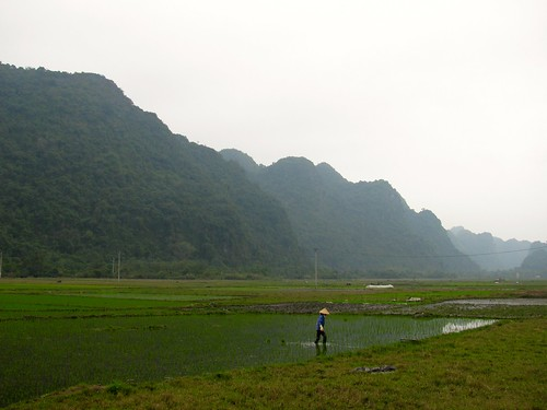 Plantaciones de arroz en Isla Cat Ba