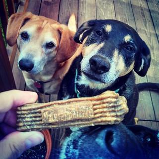 Lola photo bombing Sophie & Tut during @naturalbalanceinc #dogtreats review photo shoot. #ilovemydogs #seniordog #instadog #dogstagram #houndmix #coonhoundmix #dobermanmix