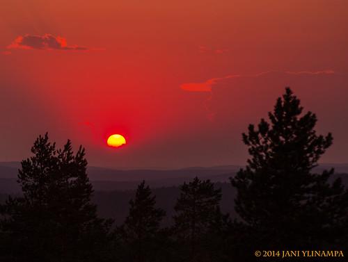 trees sunset red sun pine suomi finland landscape scenery rovaniemi lappland lapland scandinavia lappi laponia laponie norvajärvi salmivaara