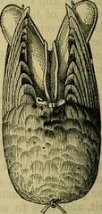 """Image from page 601 of """"Reptiles and birds : a popular account of their various orders, with a description of the habits and economy of the most interesting"""" (1883)"""