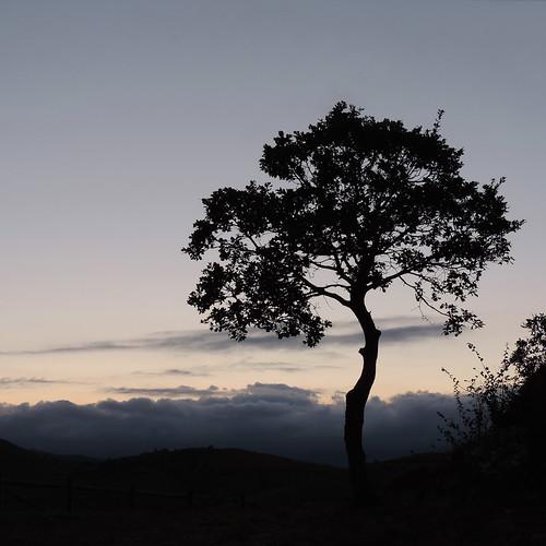 senza titolo (installazione: oak, water vapor, twilight)