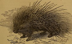 """Image from page 46 of """"Little folks in feathers and fur, and others in neither"""" (1875)"""