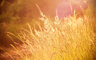 summer_light_2560x1600