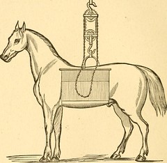 """Image from page 42 of """"The diseases of live stock and their most efficient remedies : including horses, cattle, cows, sheep, swine, fowls, dogs, etc. ..."""" (1886)"""