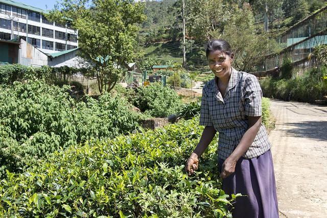 SL142 Nuwara Eliya 01 - Sri Lanka