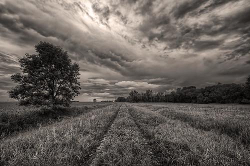 abandoned driveway prairies hdr farmyard ruralmanitoba nikkor1024mm morrismulvey