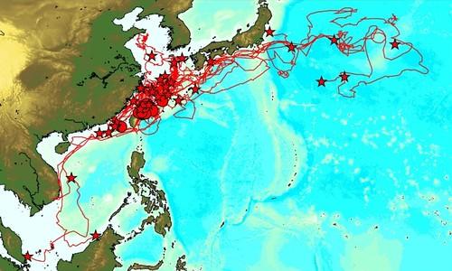 赤蠵龜衛星追蹤示意圖