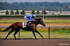 Horse racing at Emerald Downs
