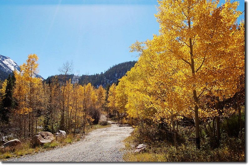 Look how bright these trees are!(Guanella Pass) 1