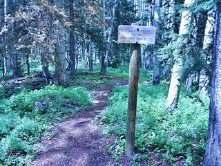 Sneffels Highline Trail - Turn Right from Deep Creek