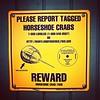 REWARD! Report #tagged #HorseshoeCrab to #Maryland #fisheries #BlueBlood