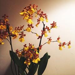 #orchids #flowers #dailynature #naturelovers #vscocam #vsco