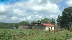 Estampa de los Llanos Orientales. De Caicara de Maturín a Caripe. Estado Monagas, Venezuela