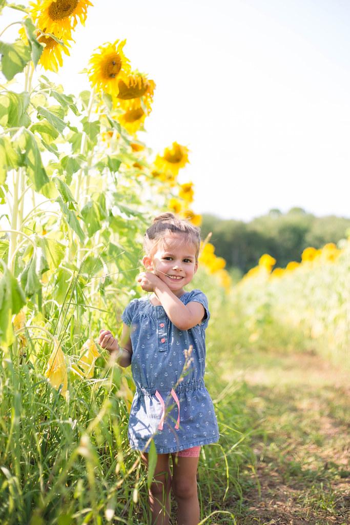 2014-08-08 Sunflower maze-048.jpg