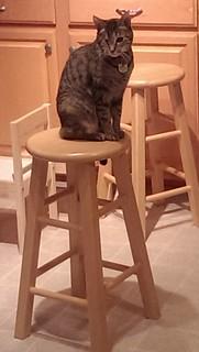 Maggie on stool