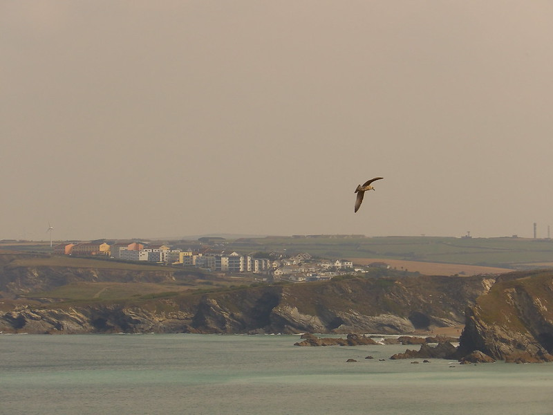The Gull and the Cliffs