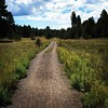 Where I spent my afternoon. #running #flagstaff