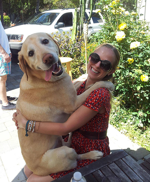 huge-puppy1