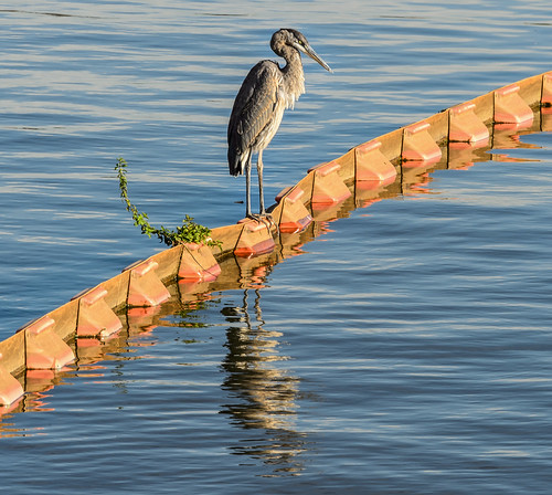 Heron on the Edge by Geoff Livingston