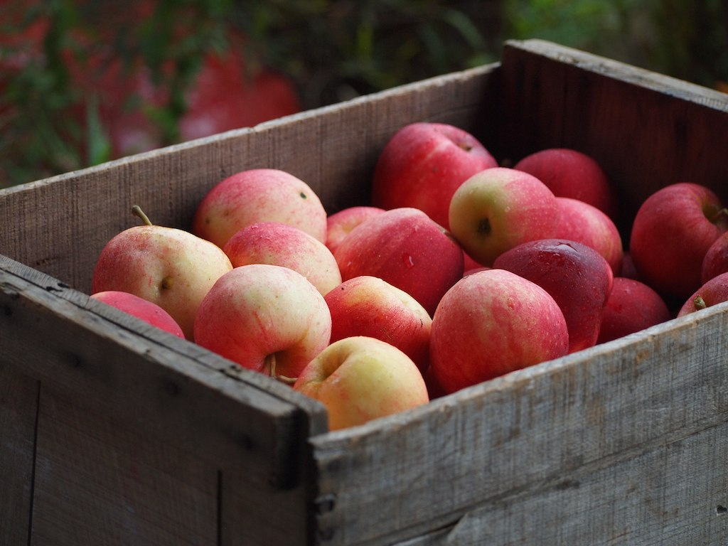 Box of fresh picked apples