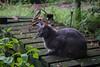 A cat in my backyard