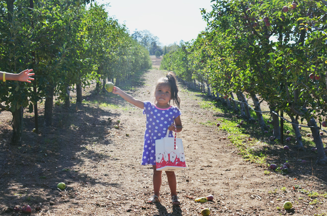 apple picking in julian