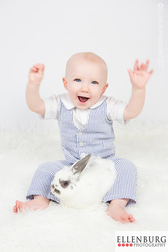 Hooray for Bunnies