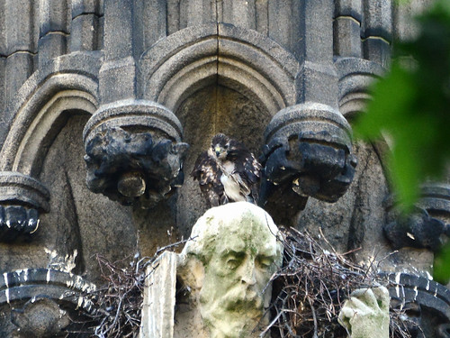Cathedral Hawk Nest (1222)