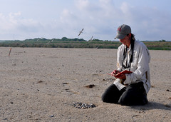 Corps biologists monitor nests at newly-constructed bird island