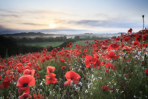 sunrise canon sigma poppies 1750 28 blackstone 40d pwpartlycloudy