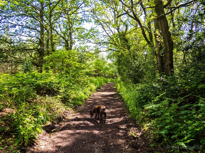 Jez heads towards Burton Common