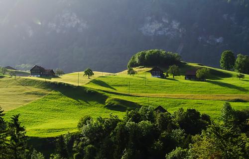 trees green schweiz switzerland morninglight hills grün kati bäume morgensonne motorradtour hügel sachseln obwalden nikon1v1