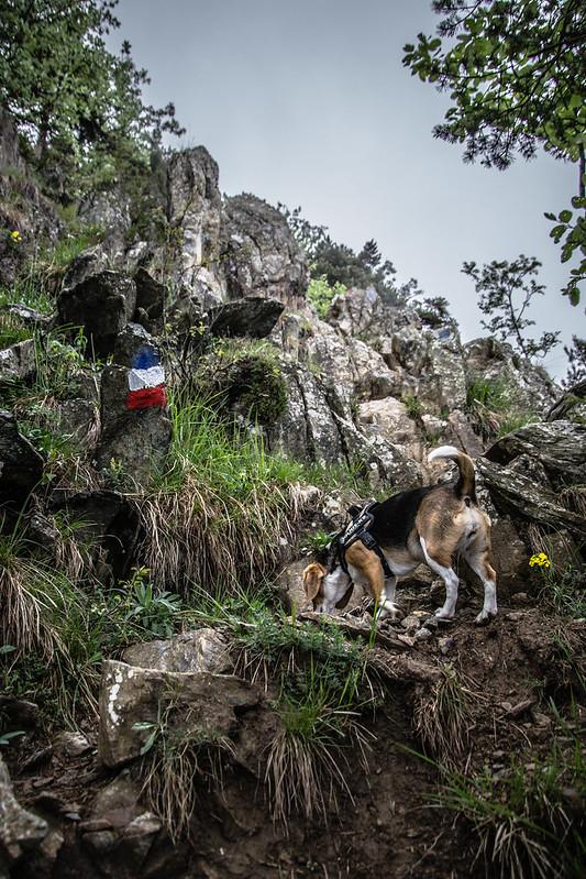 Sentiero verso Rocca Sella, segnali e beagle