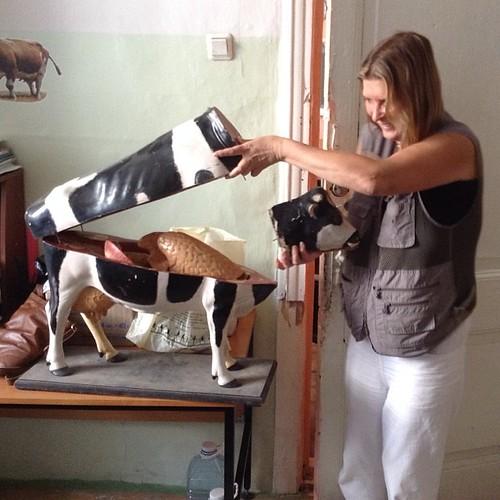 Строение коровы как оно есть! Аграрный Колледж в Калуге - кладезь отличных наглядных пособий! #калуга