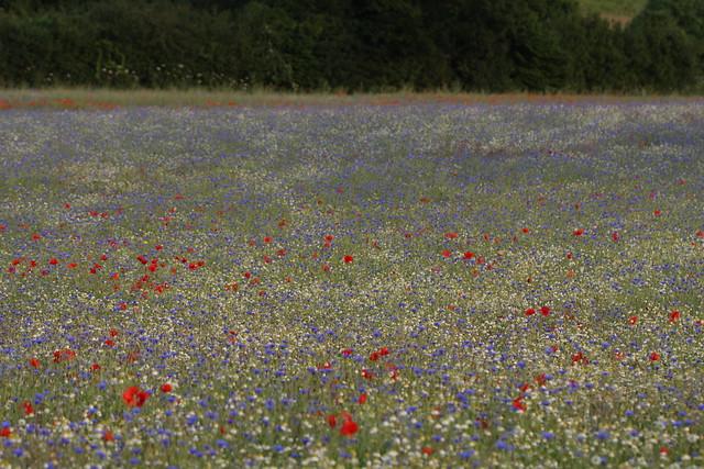 flowermeadow10