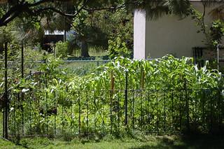 A garden photo update