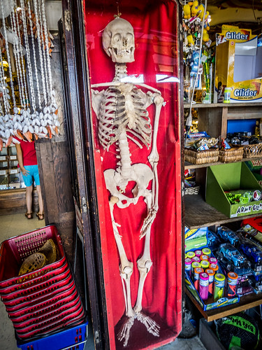 Skeleton at Marsh's Museum