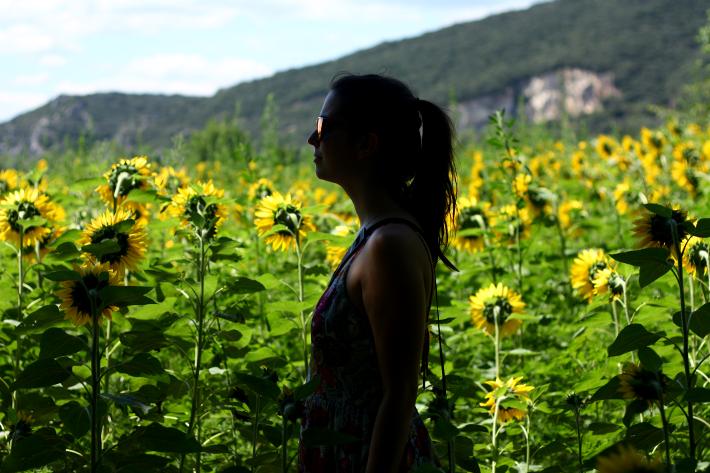 sunflower field france