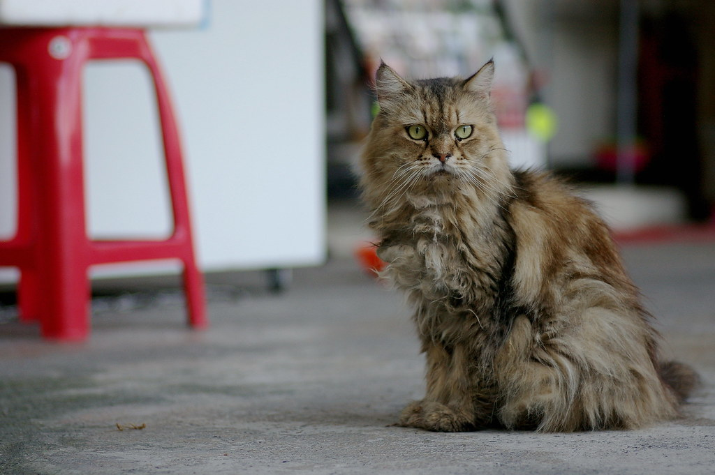 (K100D)候硐-貓,九份-味