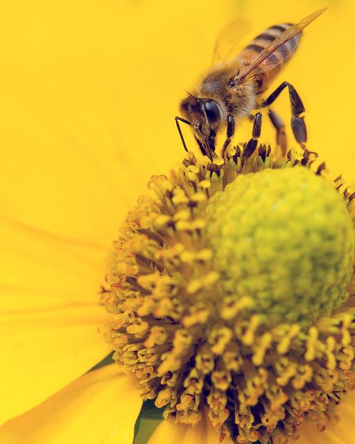 Bee Sunny Bee!!!