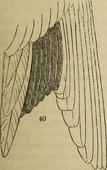 """Image from page 96 of """"On the natural history and classification of birds"""" (1836)"""