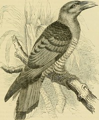 """Image from page 132 of """"Cassell's book of birds"""" (1875)"""