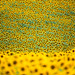 Sunflowers by Oliver C Wright
