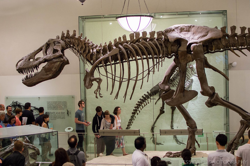 dinosaur american museum natural history